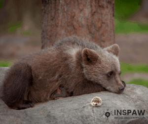 Bearcub and hedgehog