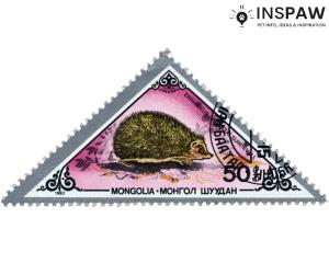 Hedgehog on mongolian stamp