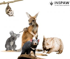 Best-known marsupials