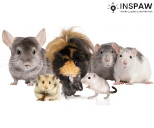 Pet Rodents
